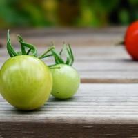 青岛杠六九西红柿的光照实验