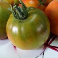 杠六九西红柿的灌溉与施肥